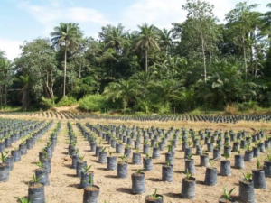 LAND INVESTMENT DEALS IN SIERRA LEONE GREEN SCENERY BRIEFINGS Part I-IV