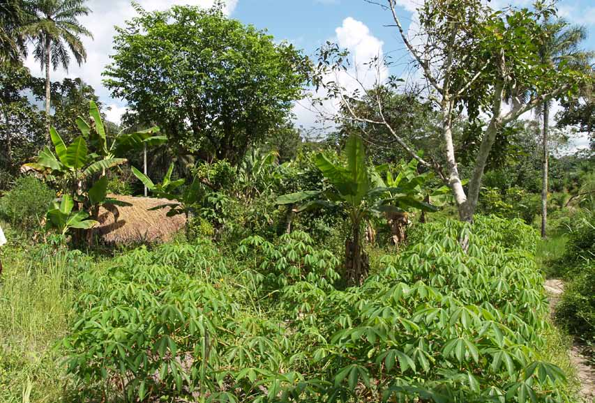 Large Scale Land Investments in Sierra Leone: Opportunities and Challenges (Green Scenery and Sierra Leone Network on the Right to Food)