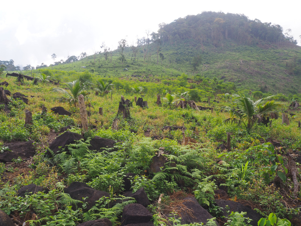 Policy Brief – Update on Land, Agriculture, Environment and Forestry issues in Sierra Leone